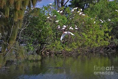 Photograph - 38- Alligator And Ibis by Joseph Keane