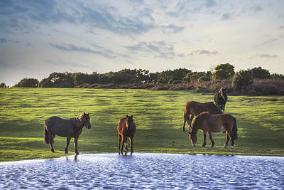 New Forest Pony Photograph - New Forest - England by Joana Kruse
