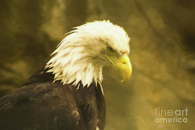 Photograph -  Bald Eagle 3 by Steven Parker