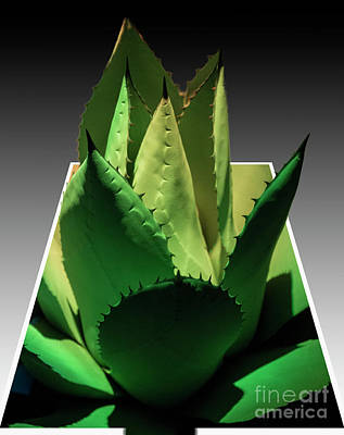 Photograph - 3d Cactus by Darleen Stry