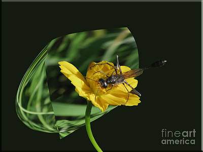 Photograph - 3d Wasp by Donna Brown