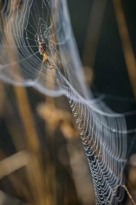 Photograph - 3d Web by Robert Potts