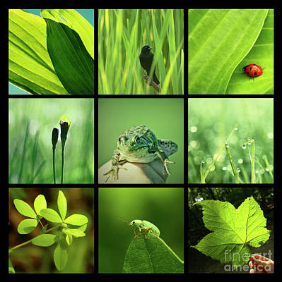 Photograph - 3x3 Green by Aimelle