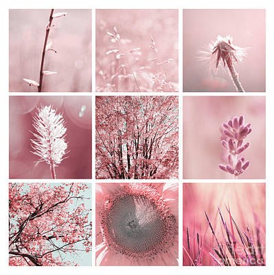 Photograph - 3x3 Pink by Aimelle