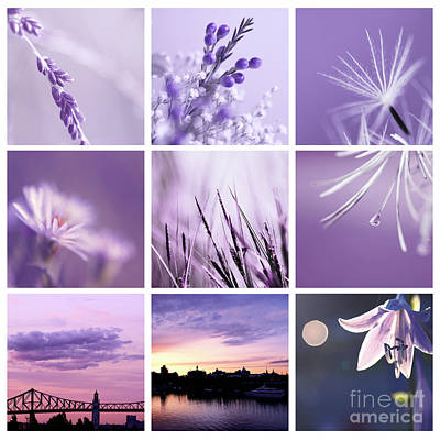 Photograph - 3x3 Purple by Aimelle