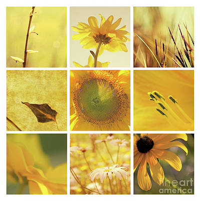 Photograph - 3x3 Yellow by Aimelle