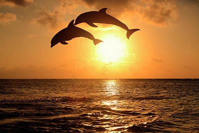 Delfin (grosser Tuemmler) Art Print by Tier Und Naturfotografie J und C Sohns