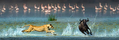 Of Birds Photograph - African Lioness Panthera Leo Hunting by Panoramic Images