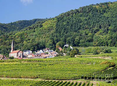 Kaysersberg Photograph - Alsace Vineyards by Yefim Bam