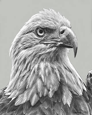 American Bald Eagle Print by Larry Linton
