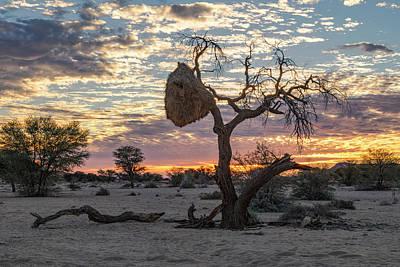 Vogel Wall Art - Photograph - Aus - Namibia by Joana Kruse