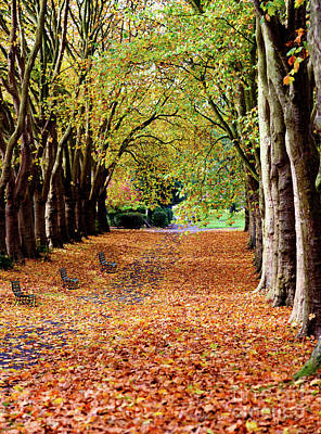 Photograph - Autumn In The Park by Colin Rayner
