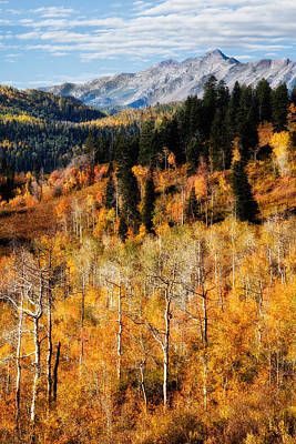 Photograph - Autumn In The Wasatch Mountains by Douglas Pulsipher