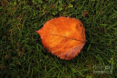 Hollywood Style - Autumn Leaf by Jim Corwin