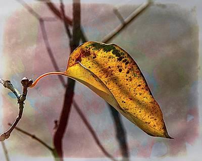 Photograph - Autumn Leaf.... by Phyllis Meinke