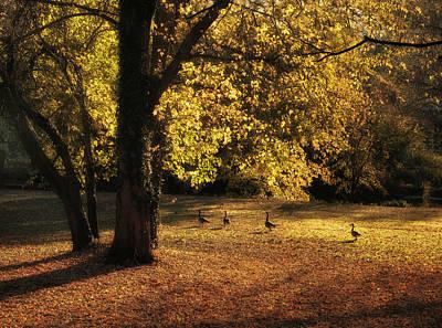 Fall Landscape Digital Art - Autumn Promenade by Jessica Jenney