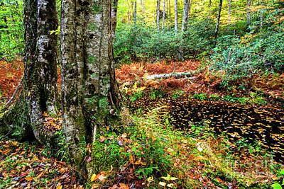 Autumn Upper Shavers Fork Preserve Art Print