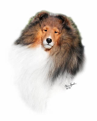 Sable Sheltie Photograph - Bis Biss Gch Paray's Preferential by Chris Lynch