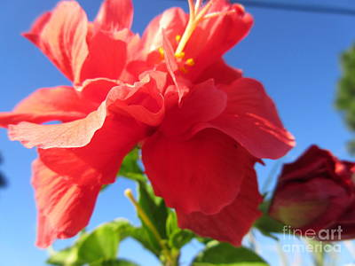 Open Impressionism California Desert Royalty Free Images - Bougainvillea Royalty-Free Image by Frederick Holiday