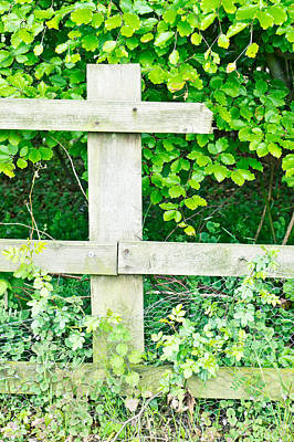 Snap Photograph - Broken Fence by Tom Gowanlock