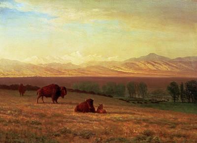 Yak Painting - Buffalo On The Plains by Albert Bierstadt
