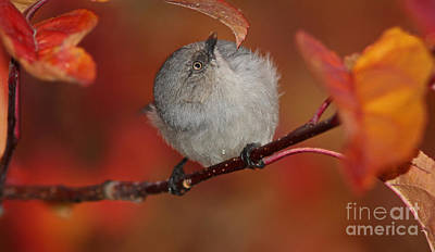 Gold Photograph - Bushtit by Gary Wing