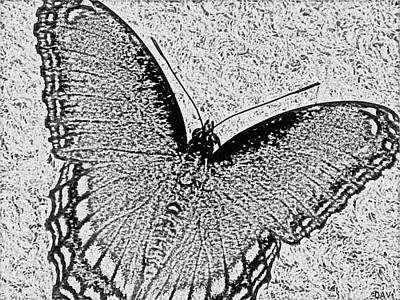 Charcoal Mixed Media - Butterfly Collection Design by Debra     Vatalaro