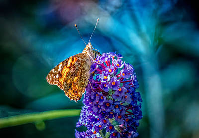 Photograph - Butterfly On The Flower by Lilia D