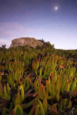 Cabo Raso Art Print by Andre Goncalves