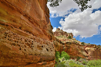 Photograph - Capitol Reef by Ray Mathis