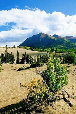 Photograph - Carcross Desert by Frank Townsley
