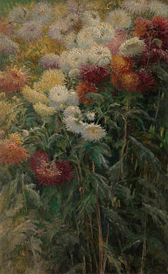 Painting - Chrysanthemums In The Garden At Petit-gennevilliers -- by Gustave Caillebotte