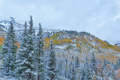 Photograph - Colorado Fall Foliage 2 by Victor Culpepper