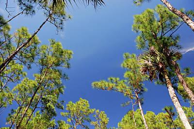 Photograph - 4- Cypress Trees by Joseph Keane