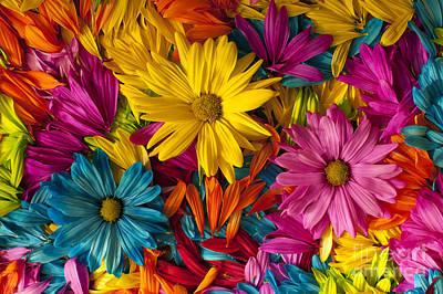 Photograph - Daisies Petals by Jim Corwin