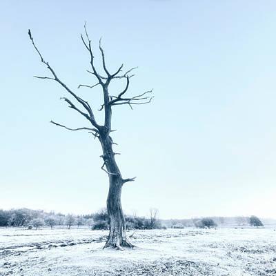 Winter Trees Photograph - Dead Tree by Joana Kruse