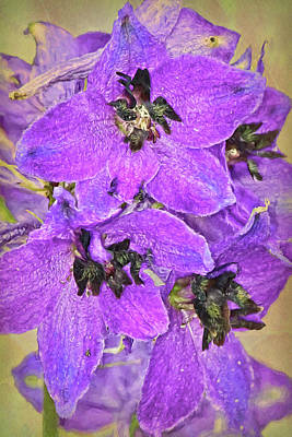Bouquet Photograph - Delphinium  by Marcia Colelli