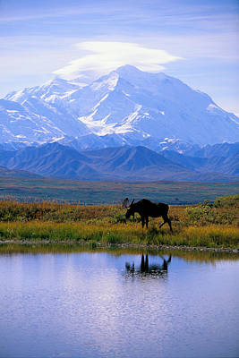 Snow Capped Photograph - Denali National Park by John Hyde - Printscapes