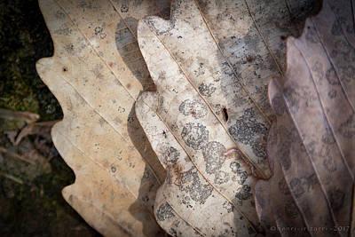 Photograph - Dried Leaves by Henri Irizarri