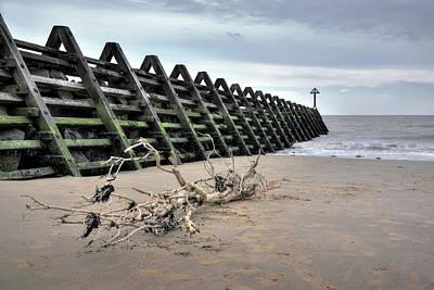 Photograph - Drift Wood by Svetlana Sewell