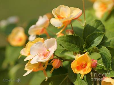Photograph - Exotic Impatiens Named Fusion Glow Yellow by J McCombie