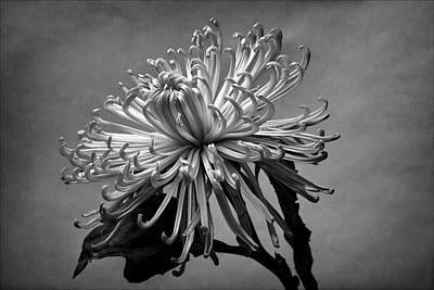 Floral Still Life Art Print by Robert Ullmann
