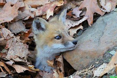 Fox Kit Original by Ken Keener