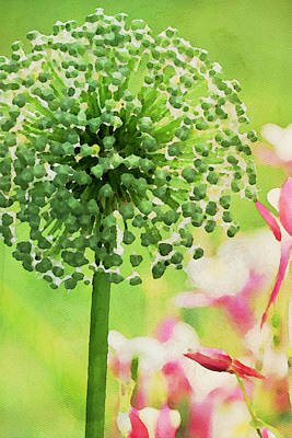 Oversized Painting - Giant Allium  by Bonnie Bruno