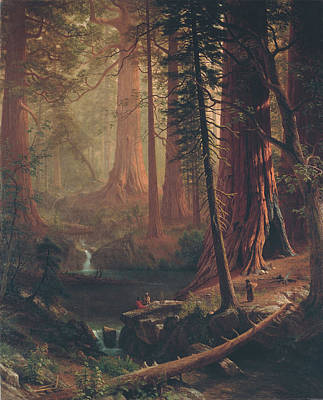 Redwoods Painting - Giant Redwood Trees Of California by Albert Bierstadt