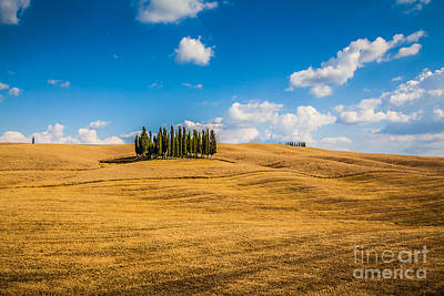 Photograph - Golden Tuscany by JR Photography