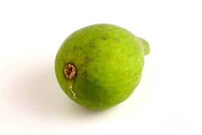 Photograph - Green Fig by Henrik Lehnerer