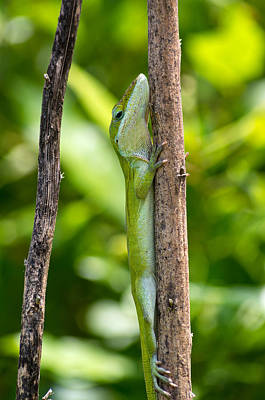 Pop Art - Green Lizard by Willard Killough III