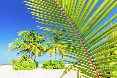 Leafs Photograph - Green Palm Tree On Tropical Beach In Maldives by Michal Bednarek