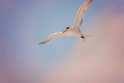 Photograph - Gull by Peter Lakomy